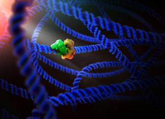 Protein molecule structure