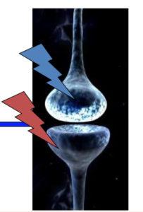 LTP: stimolazione sincrona pre e post sinaptica