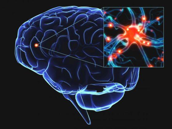Trapianto neuronale