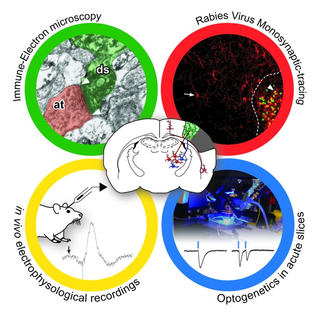 Diverse tecniche di investigazione dell'attività sinaptica