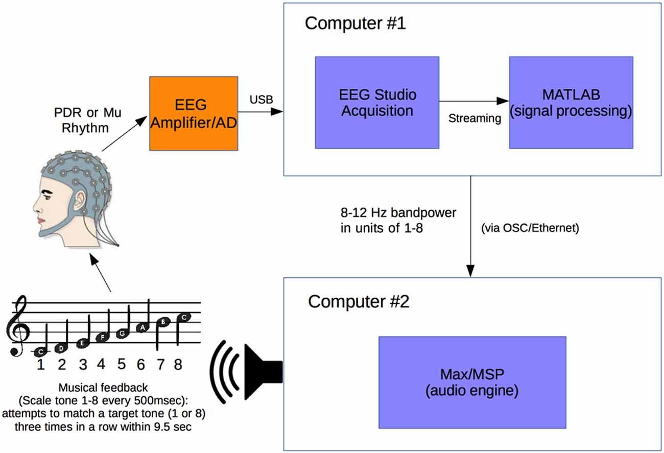 Processo di rilevamento dei segnali cerebrali e loro elaborazione con tool Matlab
