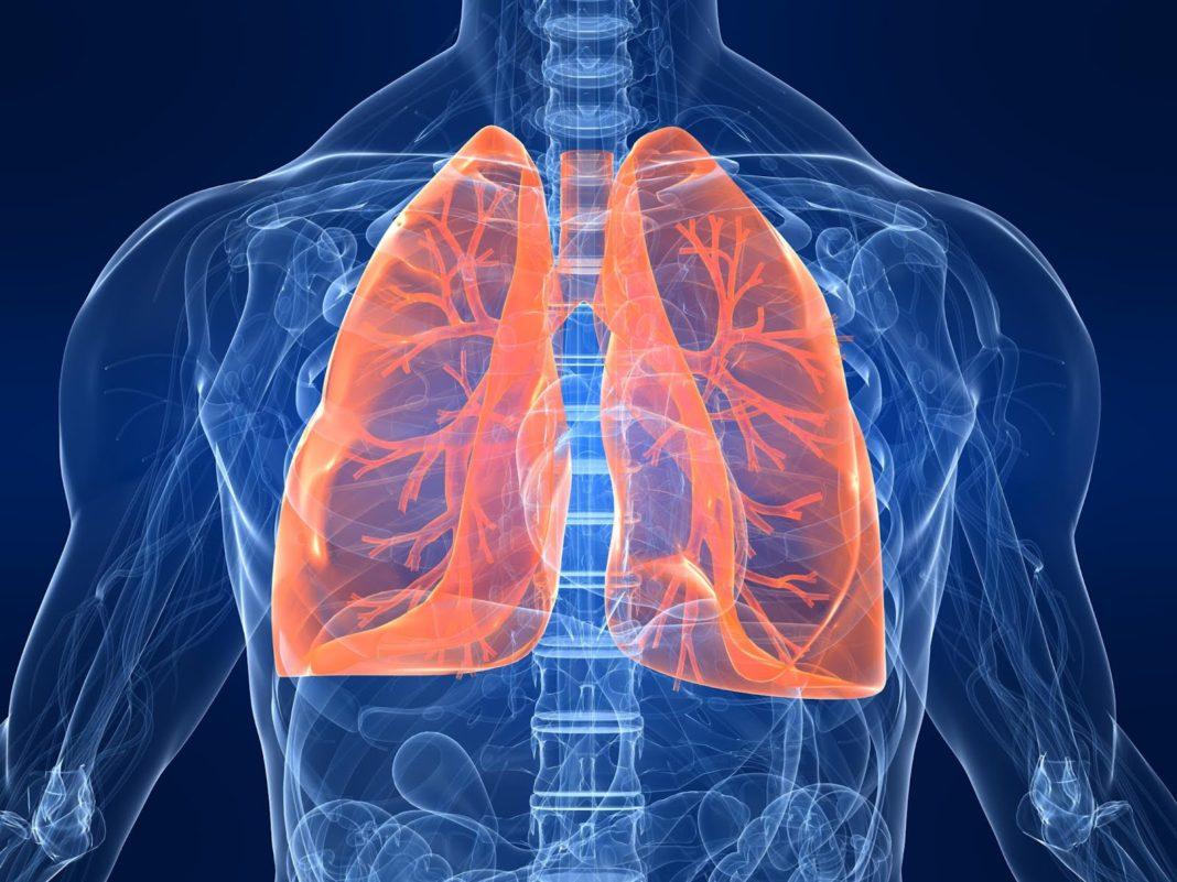 Ottenuto il primo scaffold polmonare completamente vascolarizzato