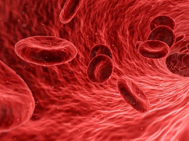 La ferita in vitro che ci illustra il meccanismo dell'emostasi