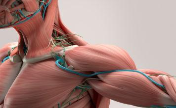 Nuovi super-muscoli artificiali in fibra di carbonio