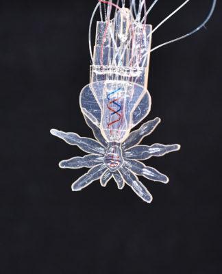 ragno robotico