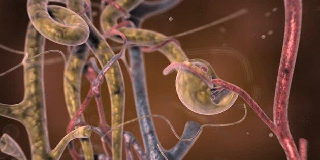Tubuli renali ingegnerizzati e stampati in 3D