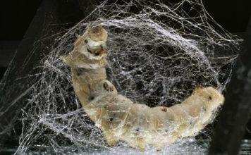 Fibroina della seta in campo biomedicale