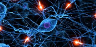 I ricercatori della Northwestern University e della Washington University School of Medicine hanno sviluppato il primo esempio di una medicina bioelettronica: un dispositivo wireless impiantabile e biodegradabile che accelera la rigenerazione dei nervi e migliora la guarigione di un nervo danneggiato.