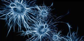 Dalle cellule staminali ad una rete neurale umana funzionante