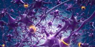 Neuroni comunicano con sinapsi artificiali: la conquista del cervello è vicina