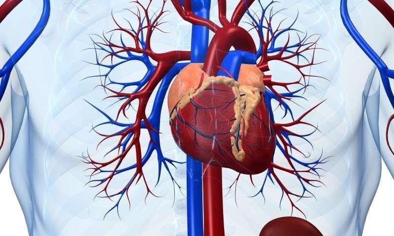 Macchina cuore-polmone: come funziona?