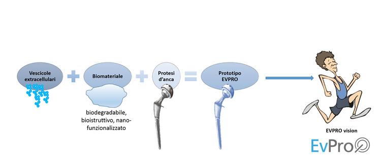 Nuovo biomateriale controlla l'infiammazione fra protesi d'anca e tessuto
