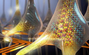 Neuroprotesi: creato in Italia il primo tessuto nervoso umano in laboratorio