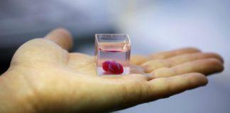 Primo mini-cuore vascolarizzato stampato in 3D
