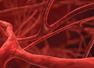 Ottenuti vasi sanguigni viventi a partire da tessuto ingegnerizzato