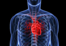 Schematizzazione cuore
