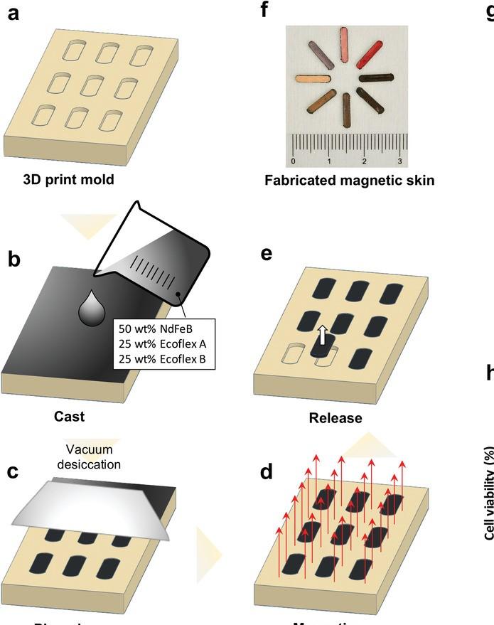 pelle magnetica polimero silicio touchless
