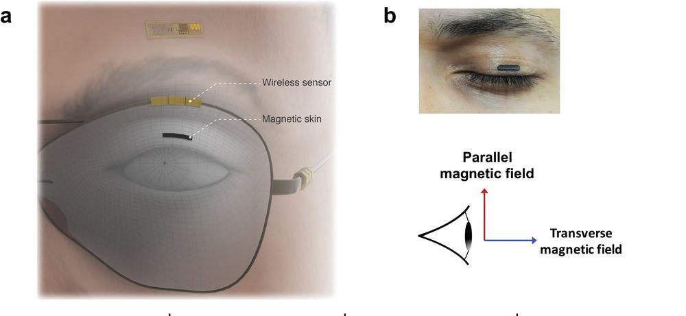 Applicazione pelle magnetica occhio palpebra
