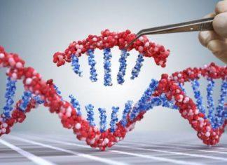 Prime editing: una nuova tecnica per correggere gli errori genetici che causano malattie