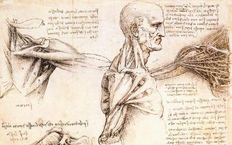 Leonardo Da Vinci: antenato della Bioingegneria