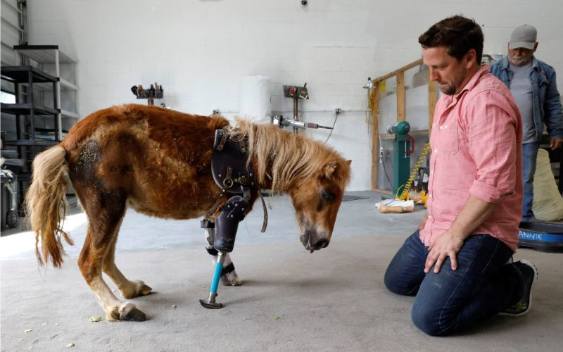 Derrick Campana - Protesi per animali