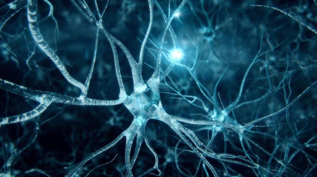 Neuroni artificiali per gli impianti neurali del futuro