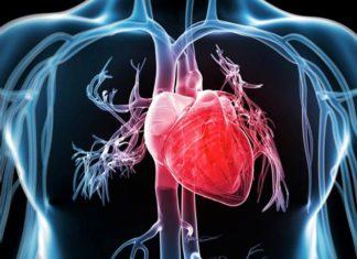 realizzato primo cuore biorobotico ibrido