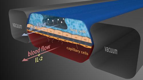 Body-on-Chip: piattaforma umana in vitro per accelerare i test sui farmaci