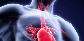 cellule staminali pluripotenti indotte cuore trapianto