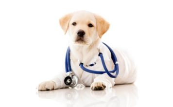 Diagnosi coronavirus cani