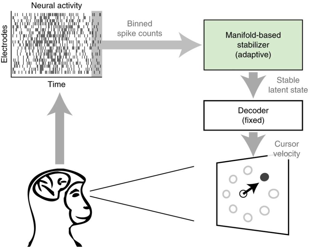 BCI: un nuovo algoritmo in grado di stabilizzarle. Credits: Nature Biomedical Engineering