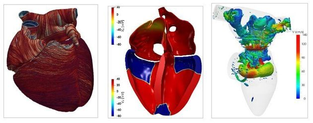 Modellizzare la fisiologia del cuore