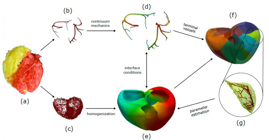 Come modellizzare il cuore con la matematica