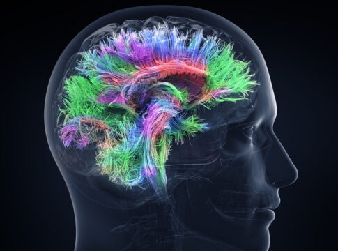 Studiare le neuroscienze con un topo virtuale