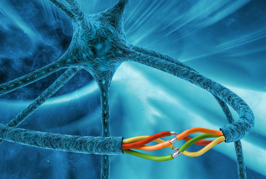 Rigenerazione dei nervi danneggiati grazie ad una guida biodegradabile.
