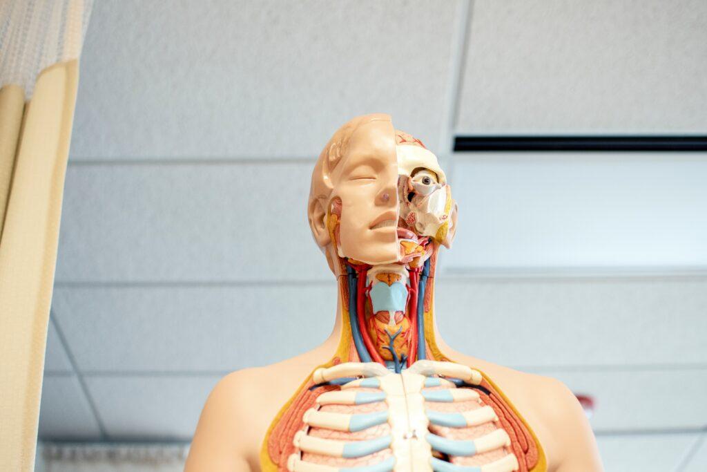 liceo biomedico test medicina