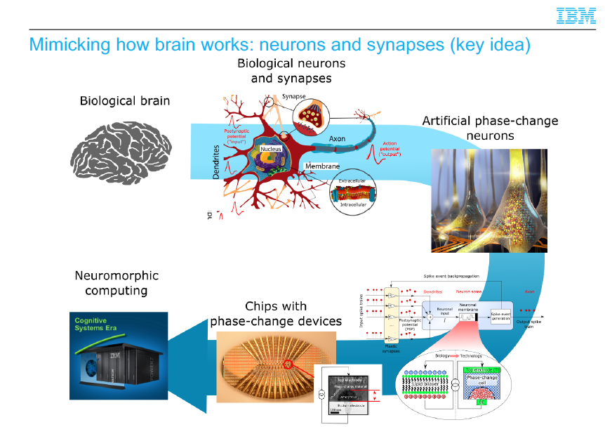 Il cervello artificiale: replicare in laboratorio il nostro organo più complesso. Credits: IBM