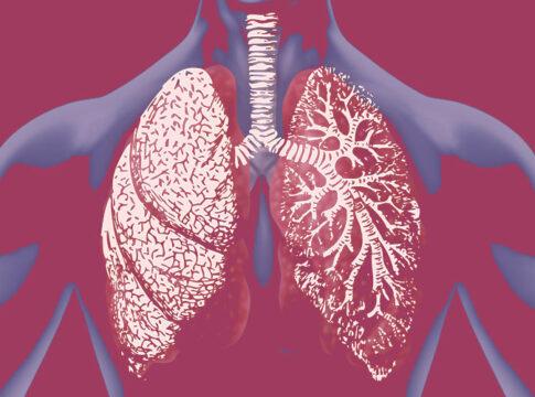 Trapianto di organi, una nuova tecnica per rigenerare i polmoni danneggiati