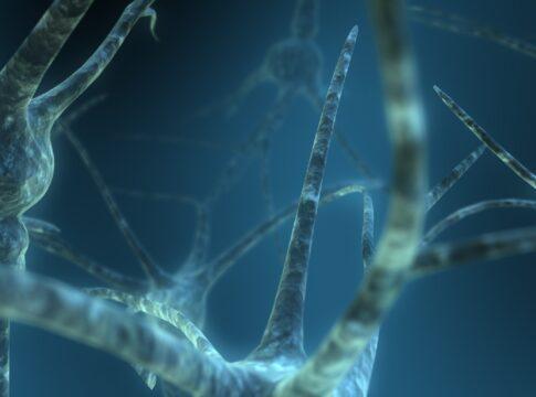 Nanotubi di carbonio utilizzati come ponte per le lesioni spinali. Credits: Scott Ingram
