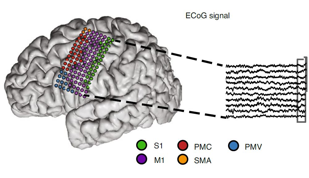 "Interfacce neurali: sviluppata la prima protesi cerebrale ""Plug-and-play"". Credits: Nature Biotechnology"