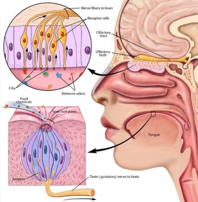 Covid-19: tutto quello che c'è da sapere su perdita di gusto e olfatto