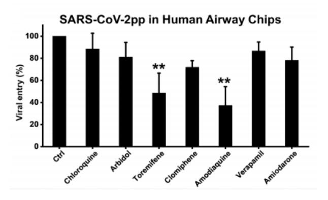 Airway Chip: un prezioso aiuto nella ricerca di una cura a COVID-19. Credits: bioRxiv
