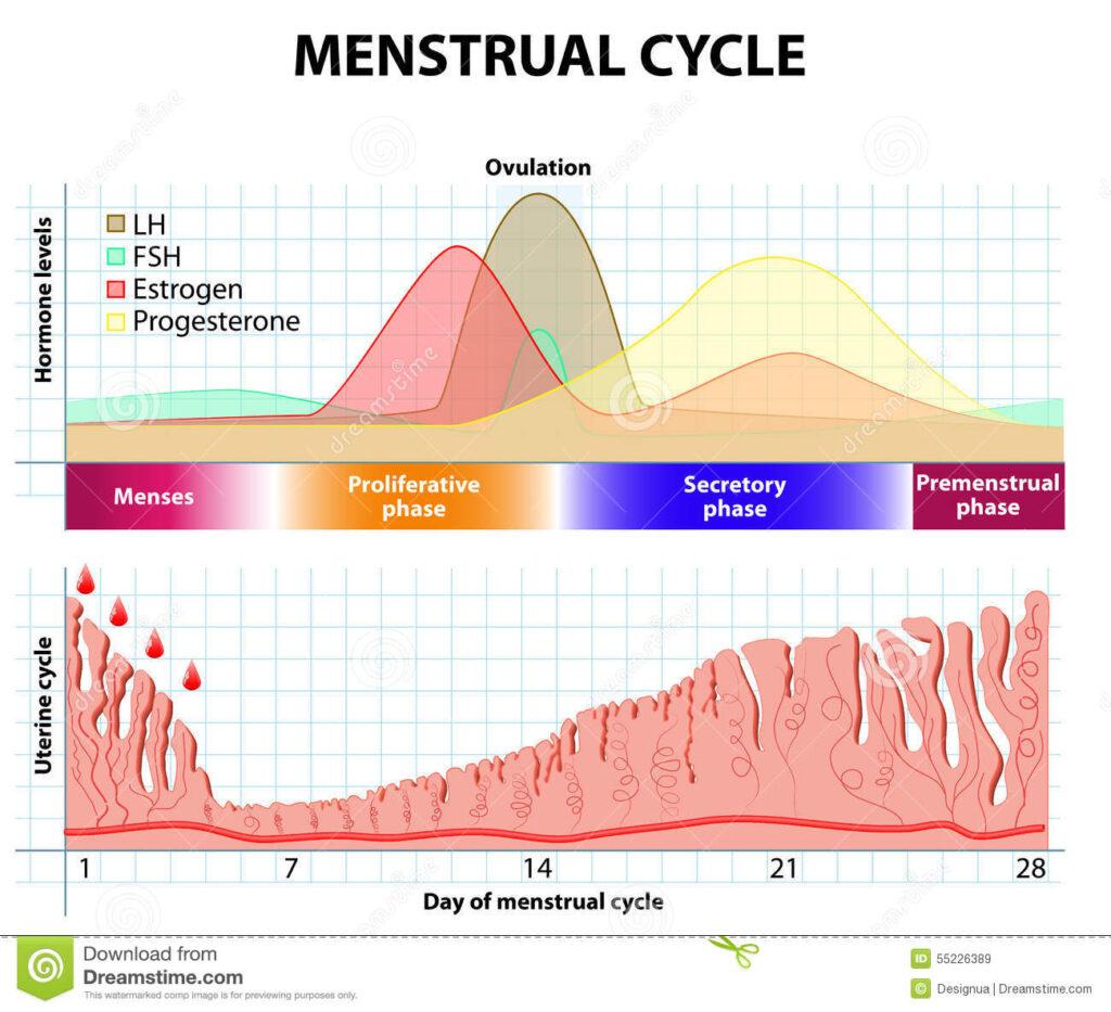 Cos'è l'endometriosi e come si cura?