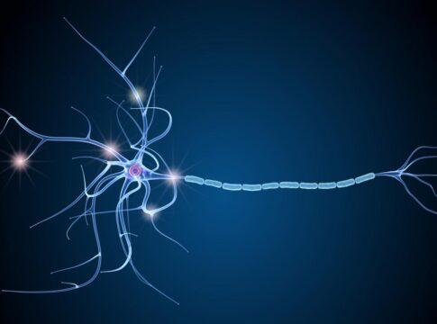 Sclerosi multipla, svolta nella ricerca: le cellule che producono mielina sono sane ma bloccate dall'infiammazione