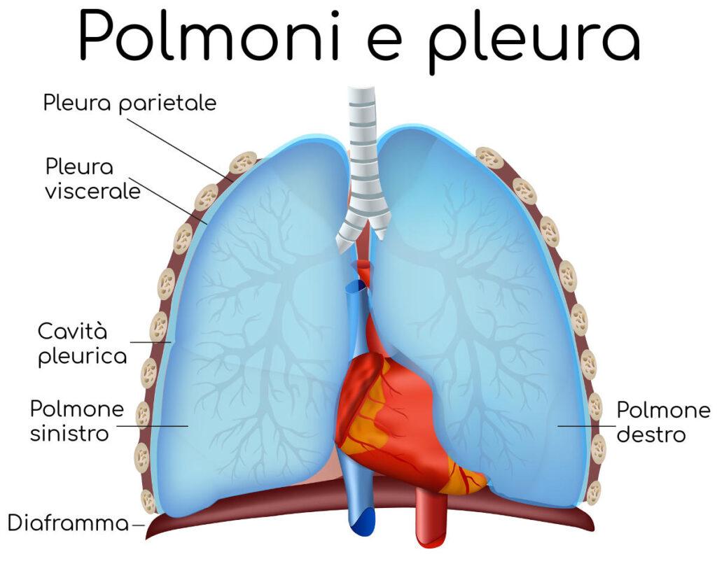 come funziona respirazione