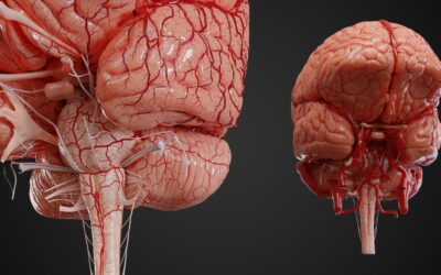 UpsurgeOn Academy: un simulatore virtuale per la pratica neurochirurgica