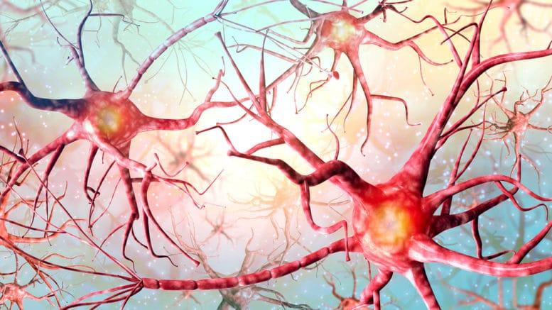 È possibile far ringiovanire il nostro cervello?