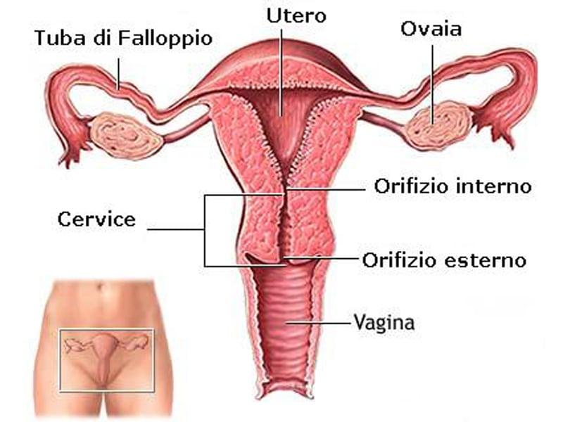 Tumore del collo dell'utero: cos'è e come si cura