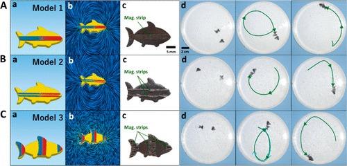 Robot nuotatori per nuove strategie in ambito biomedico. Credits: ACS