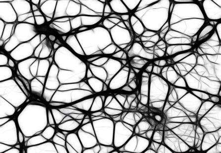 La lunga vita di alcune cellule del cervello, oltre la morte